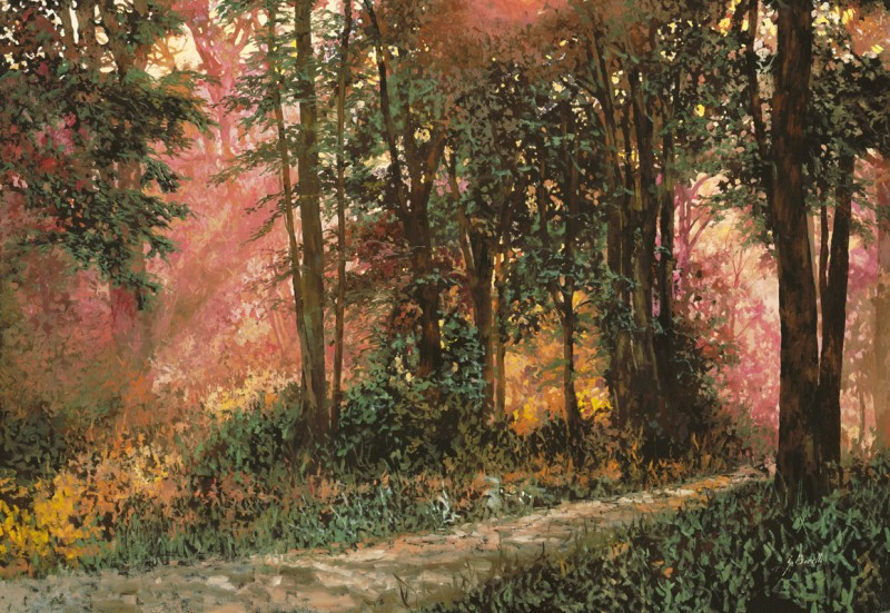 Солнечная тропинка в лесу